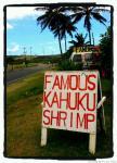 famous kahuku shrimp sign2