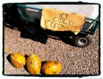 cold coconut sign