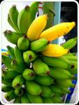hawaiian apple bananas