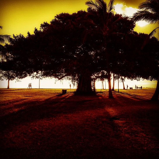 banyan tree at ala moana beach park